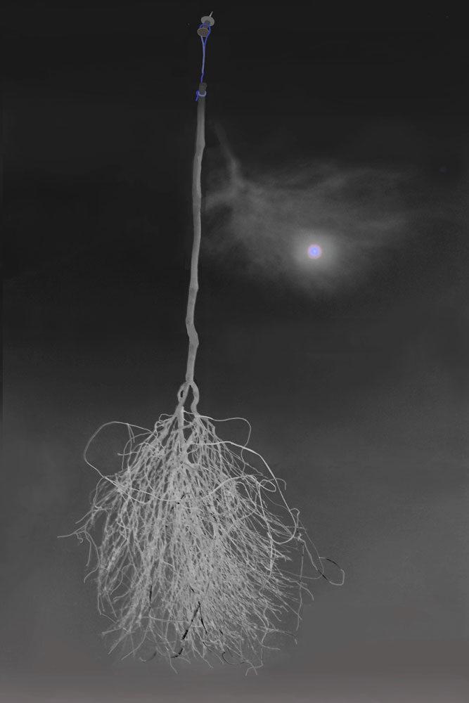 marion-llewellyn-gallery-tableaux-4